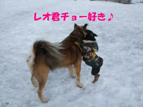 6_20100209164703.jpg