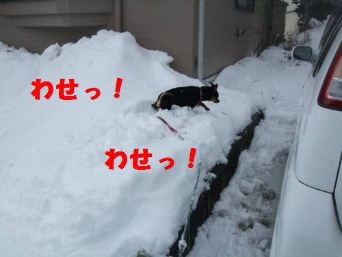 6_20100311140542.jpg