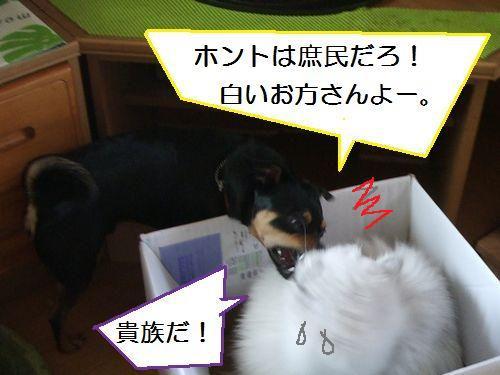 6_20100801105003.jpg