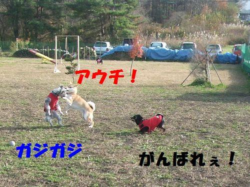 6_20101114201221.jpg