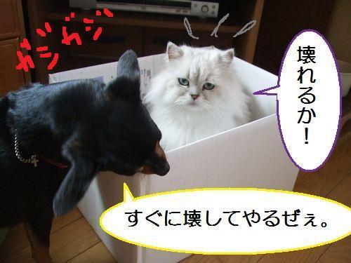 7_20100801105003.jpg