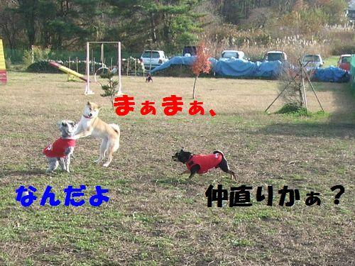 7_20101114201242.jpg