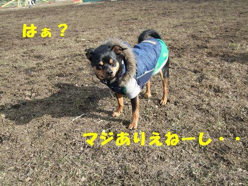 8_20100322174431.jpg