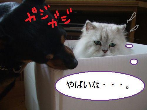 8_20100801105021.jpg