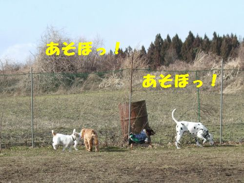 9_20100322174355.jpg