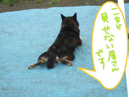 9_20100624211119.jpg