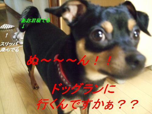 DSCF0956_convert_2.jpg