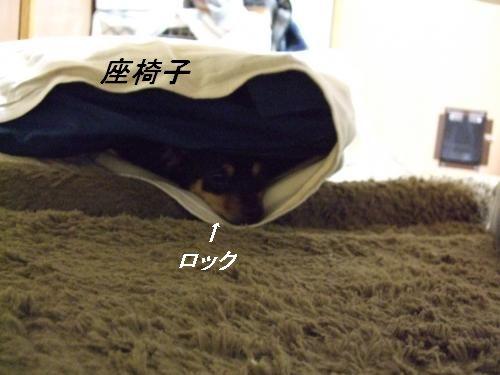 DSCF2066_convert_20091218170439.jpg