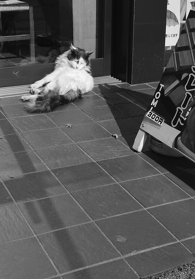 cat0216_edited-1.jpg