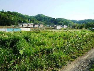 100517_hatake_kaikonmae.jpg
