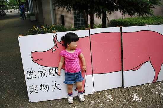 大人の豚の大きさ