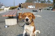 母犬2011.2.5