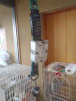 迷い犬首輪2011.1.16