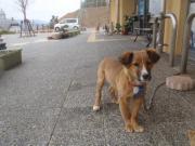 野呂山ロータリー迷い犬2011.1.23