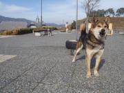 ジロー吠える写真2011.3.18