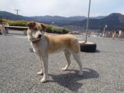 迷い犬2011.3.26