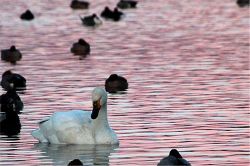 瓢湖20130305 022-3