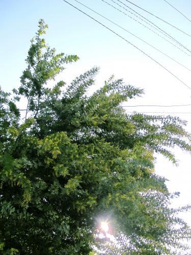 b50001_convert_20130302114535.jpg