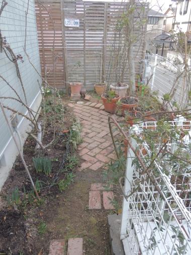3月5日 東の庭