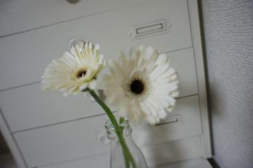 DSC01373_convert_20110317204231.jpg
