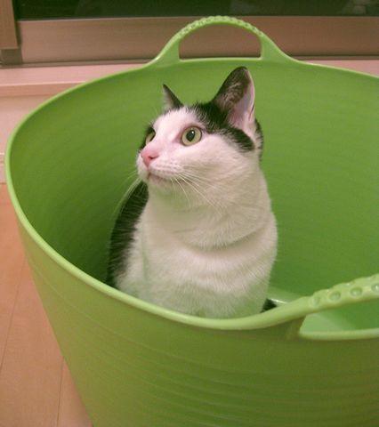 洗濯カゴ入っちゃった