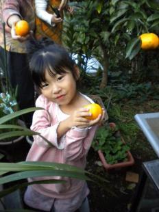 2009_1110みかん収穫