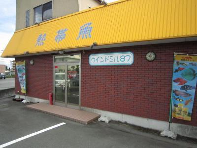 bee_81.jpg