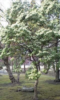 110415kozukata5.jpg