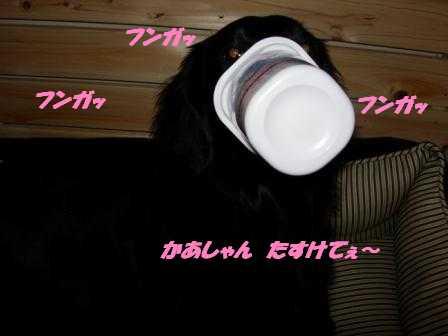 yo-guruto4.jpg