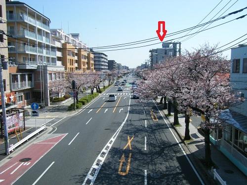 本牧通り桜8