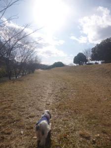 金山緑地公園(清瀬)