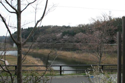 風景-20120406-1