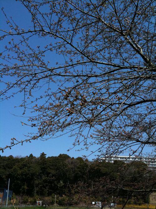 風景-20120405-1