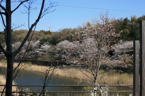 風景-20120408-1