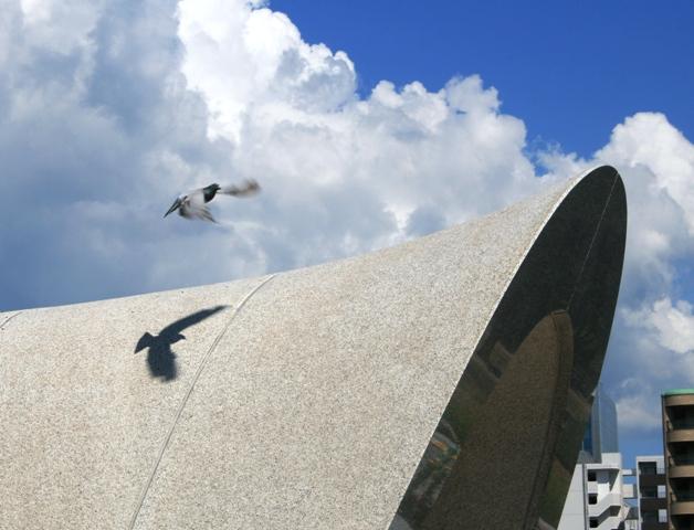 100807 平和公園 鳩の影 修正トリミングWeb大