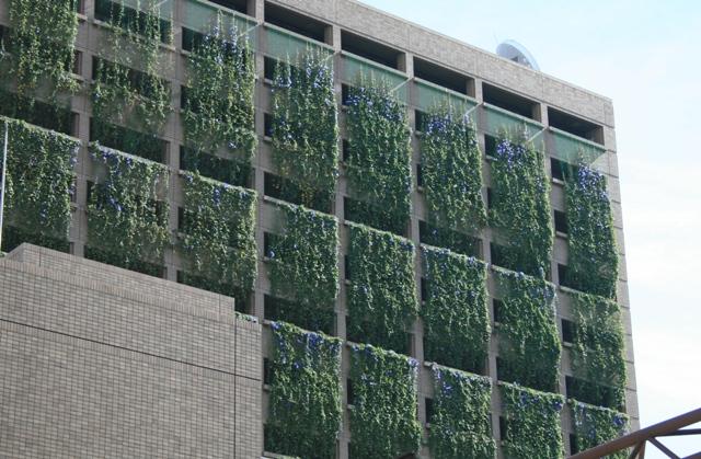 100828 市役所の窓緑化 Web大