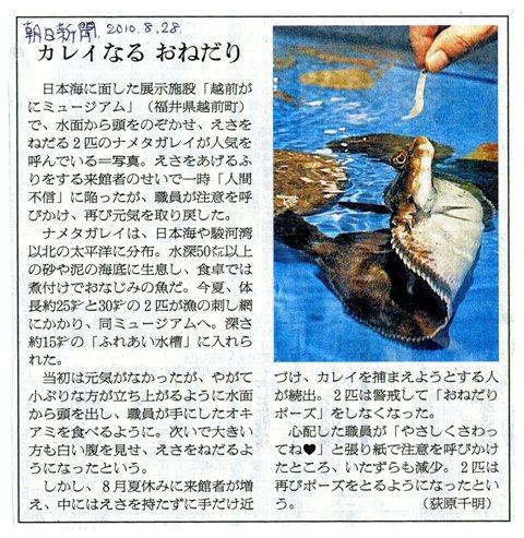 100828 ナメタガレイ(朝日新聞記事) Web大