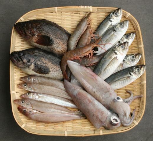 101002 魚各種 Web大