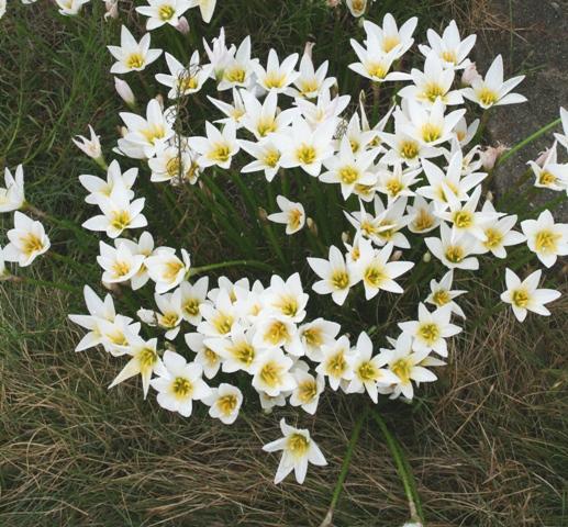 101003 白い花 Web大