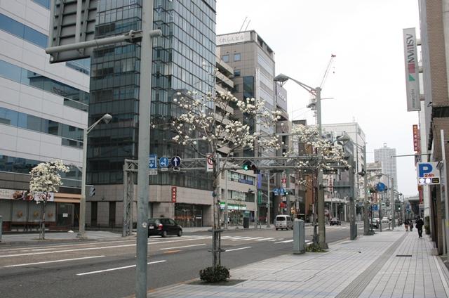 IMG_4649 中央通 ハクモクレン W