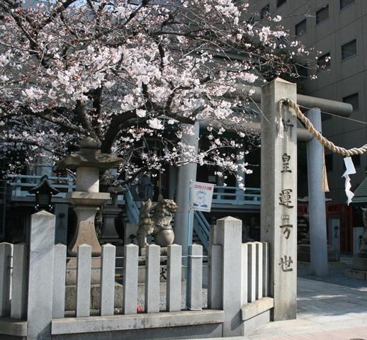 IMG_4836 白神社の桜 W