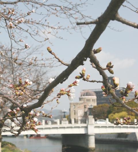 IMG_4851 平和公園の桜 まだツボミ W