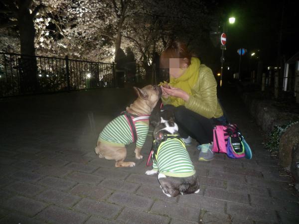 夜桜さんぽ2