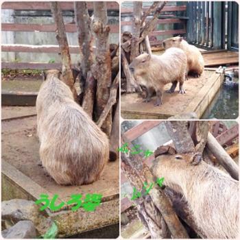 7kapibara.jpg