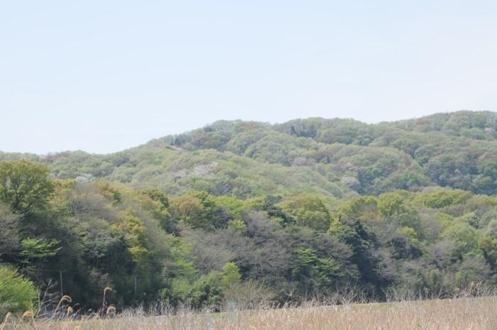 4102新緑の山