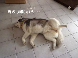 2011 6月愛ハス 004a