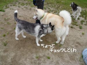 2011 6月愛ハス 035a