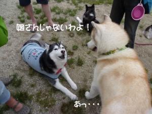 2011 6月愛ハス 066a