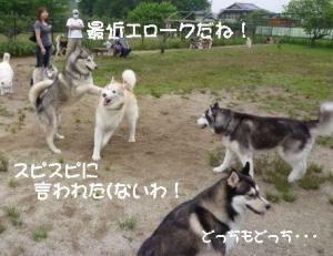 2011 6月愛ハス 049a
