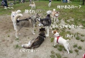 2011 6月愛ハス 050a